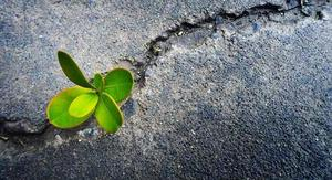 resilient plant growing through concrete