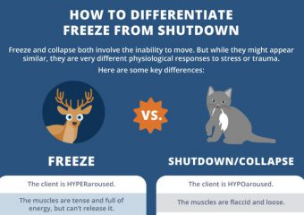 How to tell the difference between a freeze and shutdown trauma response